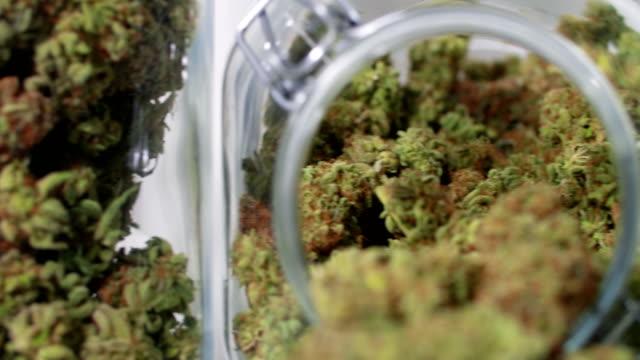 vídeos de stock, filmes e b-roll de cannabis harvest in jars - cannabis sativa