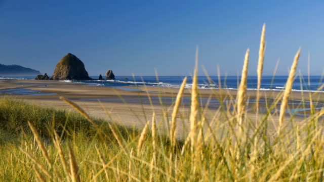 cannon beach in oregon usa - haystack rock stock videos & royalty-free footage