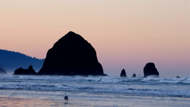 stockvideo's en b-roll-footage met cannon beach, or - oregon coast