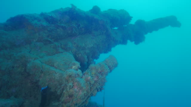 cannon of undersea wreck, sei-hyou-kaigan, ogasawara, japan - warship stock videos & royalty-free footage