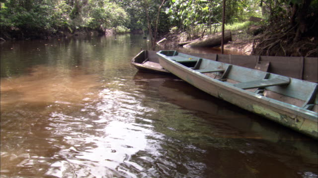 a canoe is docked on the shore of a scenic a river. - french guiana stock videos & royalty-free footage