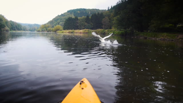 canoe on a river in the ardennes in belgium with a swan flying away in slow-motion. pov shot. - tourist stock videos & royalty-free footage