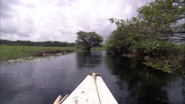 a canoe quickly glides over a scenic river. - french guiana stock videos & royalty-free footage