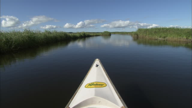 canoeing to center area in kiritappu wetland. wide and long shot. a site registered in ramsar convention. rush grows in peatland. - standing water stock videos & royalty-free footage