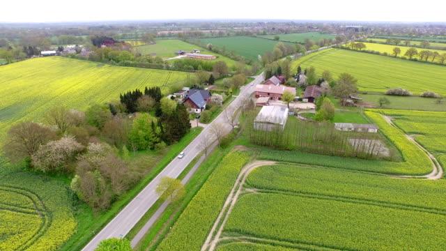 canola field aerial - schleswig holstein stock-videos und b-roll-filmmaterial