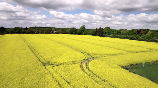 canola field aerial view - schleswig holstein stock videos & royalty-free footage
