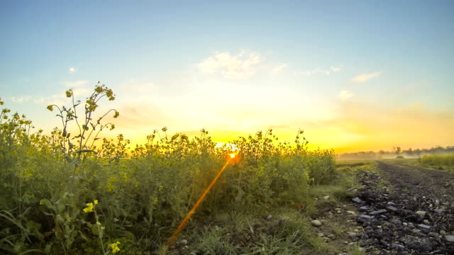 hd time-lapse: canola field at dawn - canola stock videos and b-roll footage
