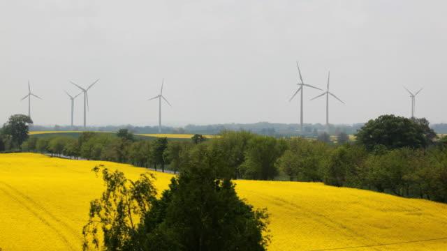 Canola Feld und Windturbinen