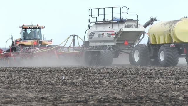 canola seeding has finally begun in manitoba amid colder than usual weather and trade concerns involving china - brassica rapa stock videos & royalty-free footage