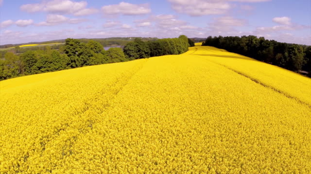 canola yellow field landscape aerial - canola stock videos and b-roll footage