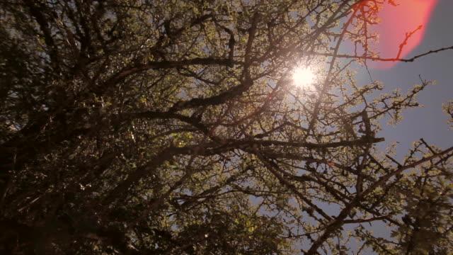 vídeos y material grabado en eventos de stock de w/s canopy (dolly track + flare) - tope de los árboles