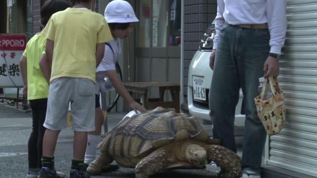 cansado de tratar con los muertos el director de una funeraria japonesa eligio como mascota a bonchan una tortuga gigante el simbolo de la longevidad... - cansado stock videos & royalty-free footage
