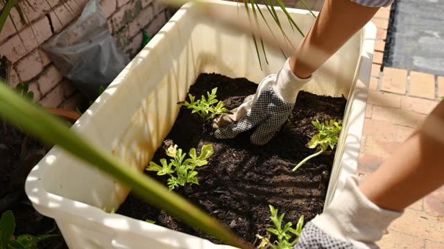 vidéos et rushes de j'ai hâte de les voir grandir - gant de jardinage
