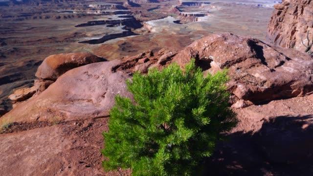 canyonlands national park, utah, usa, america - canyonlands national park stock videos & royalty-free footage