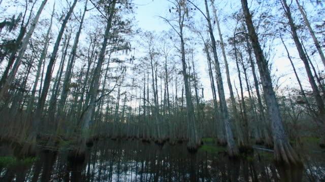 cape canaveral swamps - 水陸両用車点の映像素材/bロール