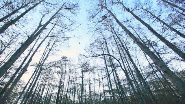 vídeos y material grabado en eventos de stock de cape canaveral swamps - grupo pequeño de animales