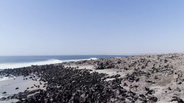 Cape Cross. Seals colony