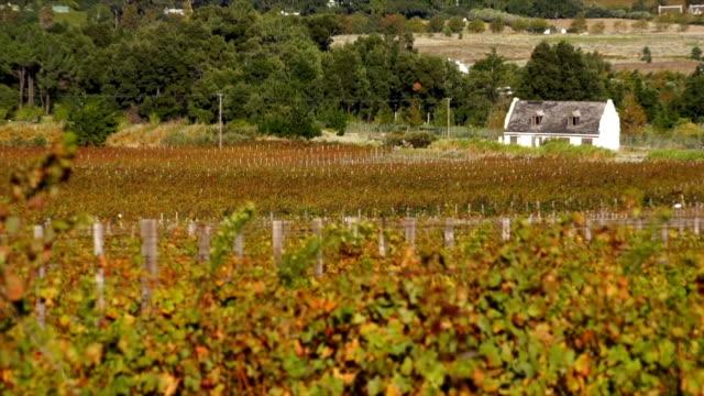 vídeos y material grabado en eventos de stock de ms zi cape dutch style cottage in vineyard / franschhoek/ western cape/ south africa - cabo winelands