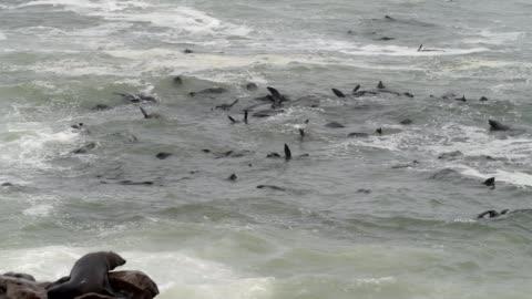 cape fur seal - cape fur seal stock videos & royalty-free footage