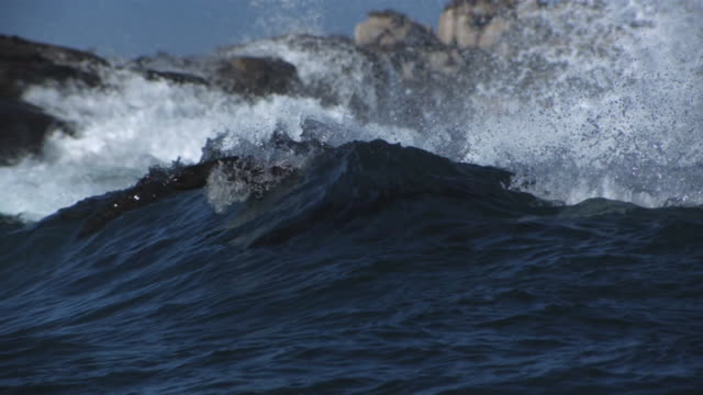 cape fur seals jumping the waves - robbe stock-videos und b-roll-filmmaterial