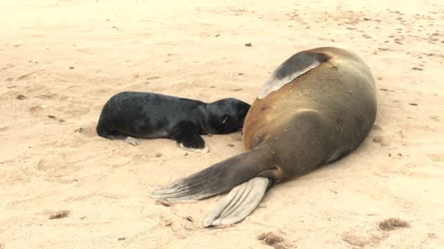 Cape fur seals, Namibia