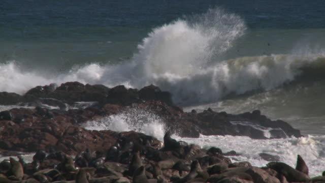 vídeos y material grabado en eventos de stock de cape fur seals (arctocephalus pusillus) on rocks, waves splashing, cape cross, namibia - foca peluda del cabo