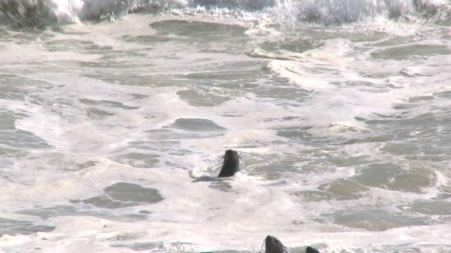 vídeos y material grabado en eventos de stock de cape fur seals (arctocephalus pusillus) swimming; water splash, cape cross, namibia - foca peluda del cabo