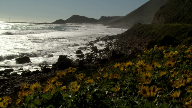 ms cape peninsula, wildflowers in foreground, western cape province, south africa - peninsula stock videos & royalty-free footage