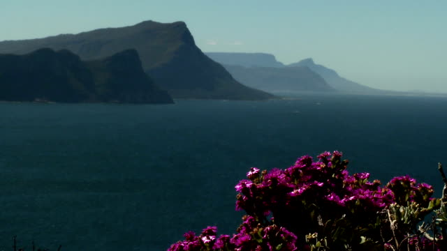 WS Cape Point mountains and sea, pink flowers in foreground, Western Cape Province, South Africa