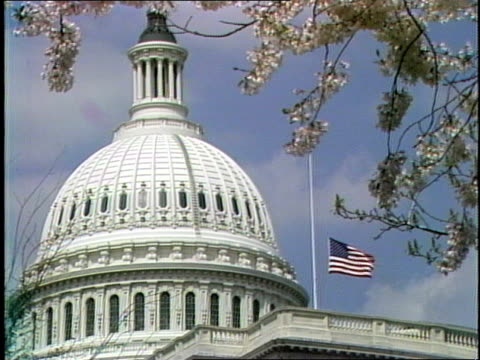 vidéos et rushes de capitol building and dome with american flag at half-staff; tree branches with flower blossoms in fg. - style néoclassique