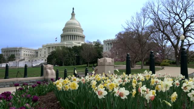 vídeos de stock, filmes e b-roll de capitol dos eua edifício west fachada vista distante com daffodils primavera e tulipas em washington, dc - domo