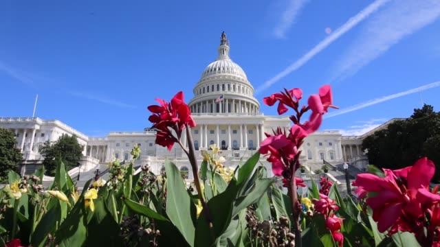 vídeos de stock, filmes e b-roll de capitólio dos estados unidos washington dc flores vídeo - legislação