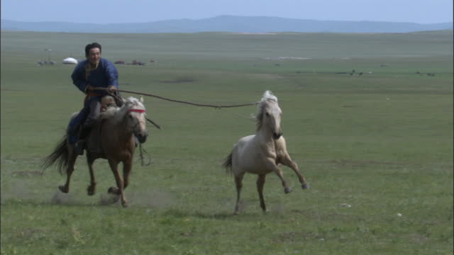 captured horse runs through herd, inner mongolia, china - one mid adult man only stock videos & royalty-free footage