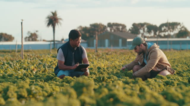 capturing all the data for the day - farm worker stock videos & royalty-free footage