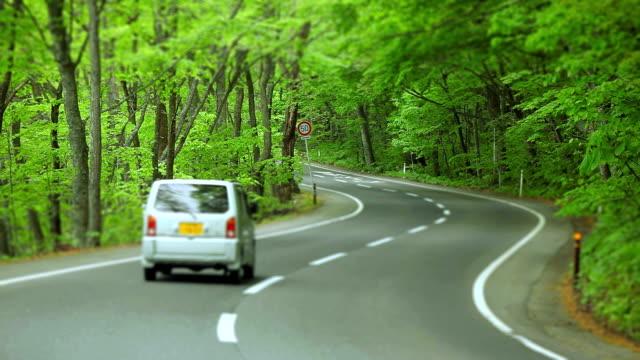 車と緑の森