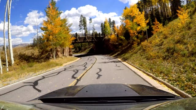 car commercial driving scenic fall colors - aspen tree stock videos & royalty-free footage