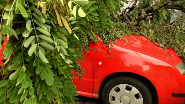 stockvideo's en b-roll-footage met auto verpletterd door de vallende boom - beschadigd
