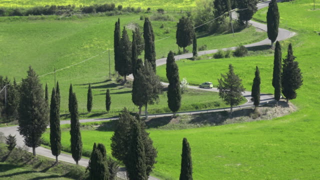 A car drive on cypress tree lined winding road in tuscany hills