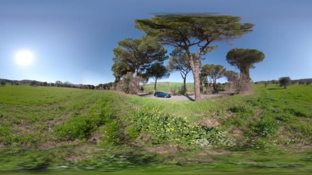 360 VR / A car drive through pine tree avenue in tuscany hills