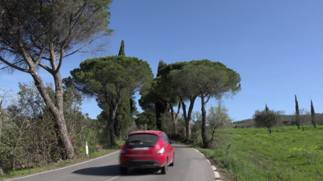 a car drives in pine tree avenue in tuscany hills - curve stock videos and b-roll footage