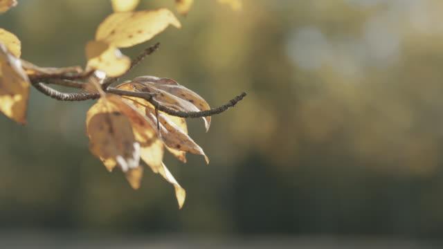 Car drives past autumn leaves