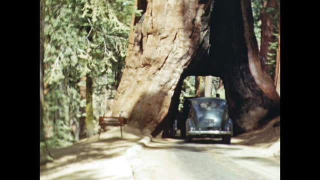 a car drives through a hole in a sequoia tree. - sequoia stock videos and b-roll footage