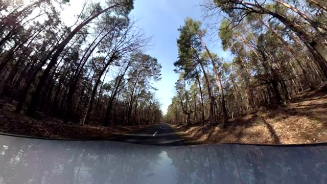 Car drives through the forest, equirectangular panoramic, 360 VR, 360VR, monoscopic, 360 Footage, Little planet effect