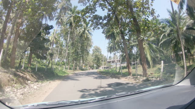 MS Car driving along sunny road lined with palm trees,Sri Lanka