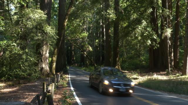 vídeos de stock, filmes e b-roll de car driving down highway through redwood forest - sequoia sempervirens