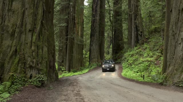 Car driving forward on Howland Road, Jedediah Smith State Park, California