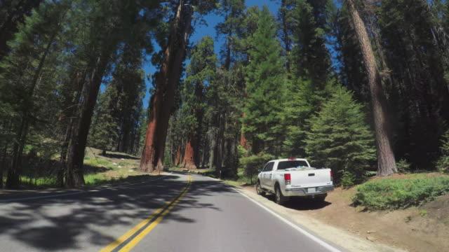 vídeos y material grabado en eventos de stock de conduciendo un coche pov en el parque nacional sequoia, california - parque nacional de secoya