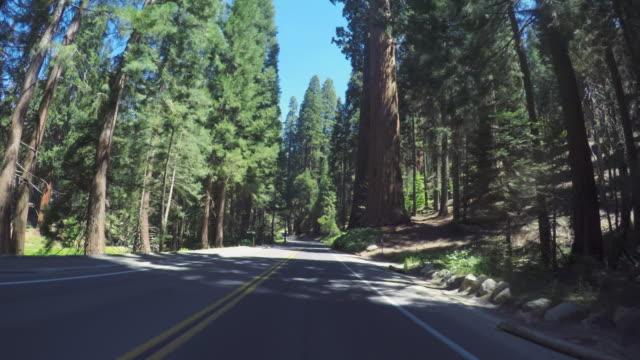 vidéos et rushes de voiture de pov conduisant dans les forêts majestueuses du parc national de sequoia, californie - séquoia géant