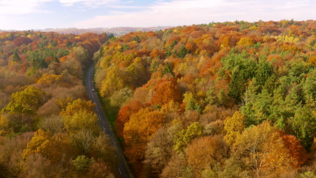AERIAL Car driving on a road through forest in fall
