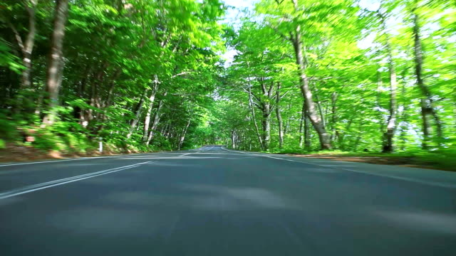Car driving on forest road